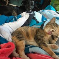 Reference hlídání kočky a psa