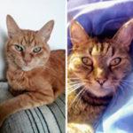 Reference Hlídání koček v Litoměřicích