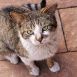 Reference Hlídání koček Lovosice