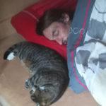 Recenze hlídání kočky